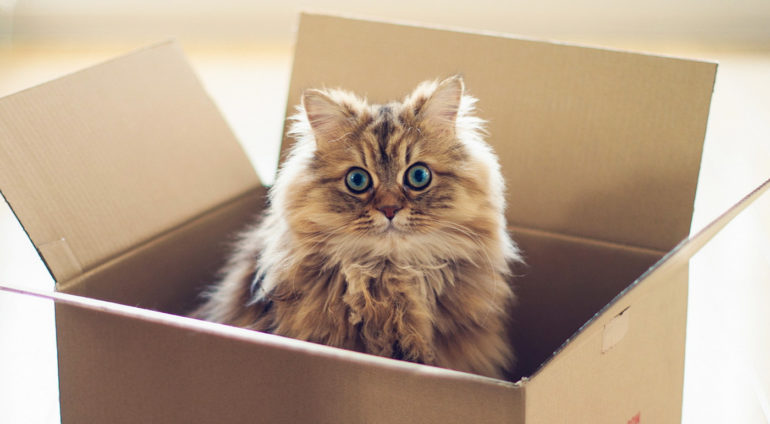 L'Usine intelligente, c'est plus que de compter des boîtes!